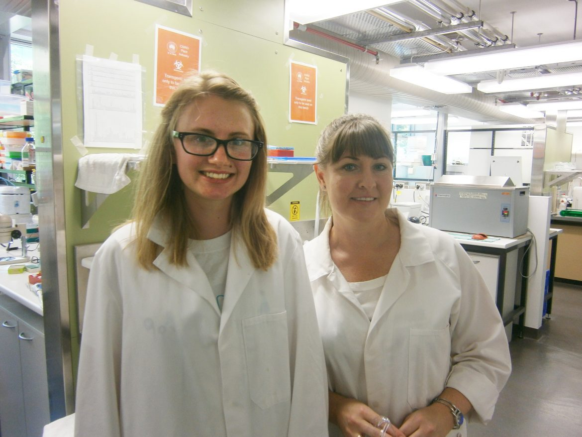 Volunteering develops passion for crop genetics  and research - content image