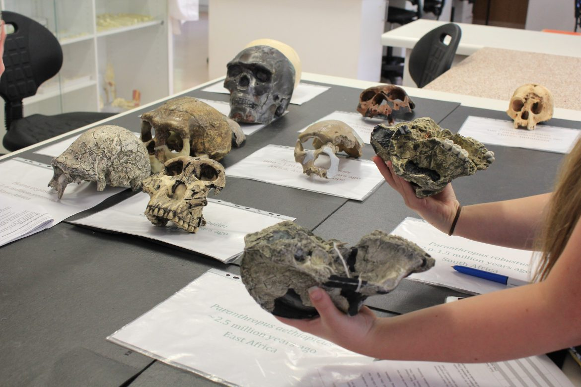Having a skele-ton of fun at ANU Bioanthropology! - content image